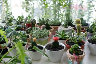 Foto 15 - Interior di Living with LOF Plants & Kitchen oleh Deasy Lim