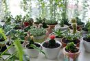 Foto Interior di Living with LOF Plants & Kitchen