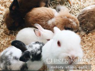 Foto 2 - Interior di MyBunBun Rabbit Cafe oleh Melody Utomo Putri