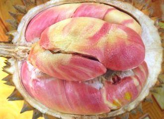 Wajib Tahu, Ini 5 Jenis Durian yang Terpopuler di Indonesia!