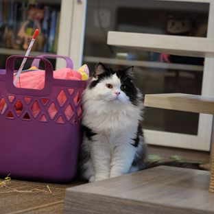 Foto review Cutie Cats Cafe oleh Reinard Barus 6