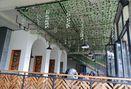 Foto Interior di Kalpa Tree
