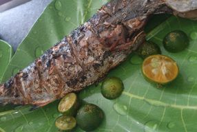 Foto Restoran Ikan Tude Manado