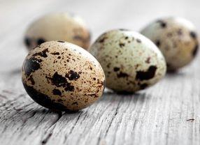 5 Jenis Telur yang Paling Sering Dipakai di Dunia Kuliner dan Manfaatnya