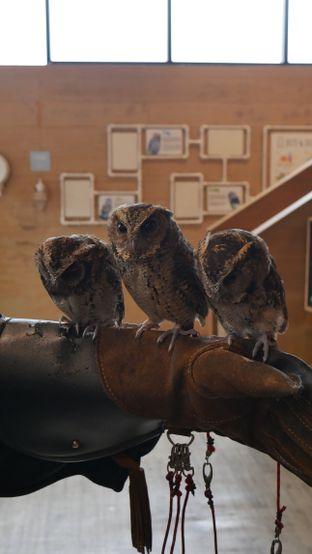 Foto 6 - Interior di Barn Owl Cafe oleh Olivia