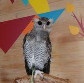 Foto di Barn Owl Cafe
