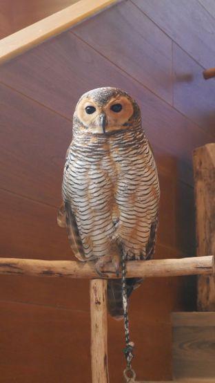 Foto 9 - Interior di Barn Owl Cafe oleh Olivia