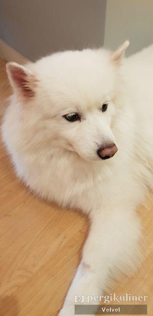 Foto 5 - Interior(Samoyed) di Boogie Doggie Pet Cafe oleh Velvel