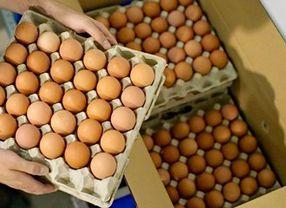 Wow, Ketahui Umur Telur Mentah Hanya dengan Segelas Air