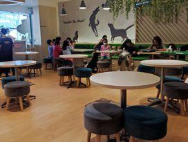 foto Boogie Doggie Pet Cafe