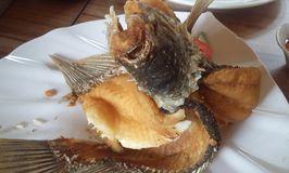 Pondok Ikan Gurame