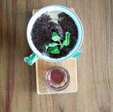 Foto Es kopi susu jadoel di Casa Kopi - Hotel Casa Living Senayan