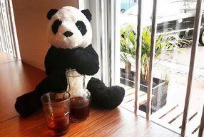 Foto Bear & Co
