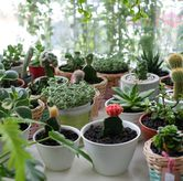 Foto di Living with LOF Plants & Kitchen