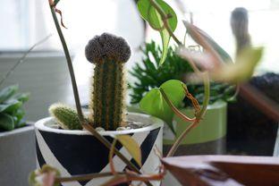 Foto 17 - Interior di Living with LOF Plants & Kitchen oleh Deasy Lim