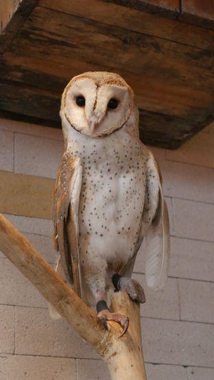 Foto 8 - Interior di Barn Owl Cafe oleh Olivia