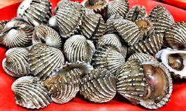 Angga 09 Seafood