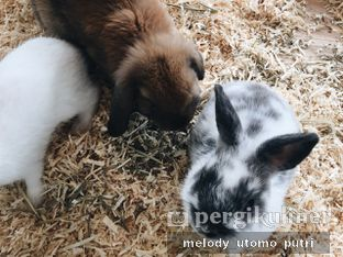 Foto 8 - Interior di MyBunBun Rabbit Cafe oleh Melody Utomo Putri
