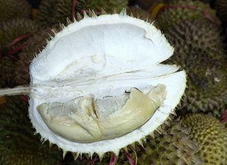 Kebanyakan Makan Durian? Ini Tipsnya Agar Tak Sampai Mabuk