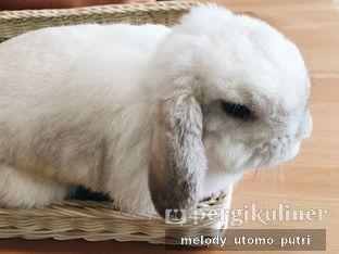 Foto 9 - Interior di MyBunBun Rabbit Cafe oleh Melody Utomo Putri