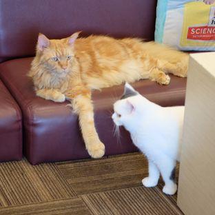 Foto review Cutie Cats Cafe oleh Reinard Barus 2