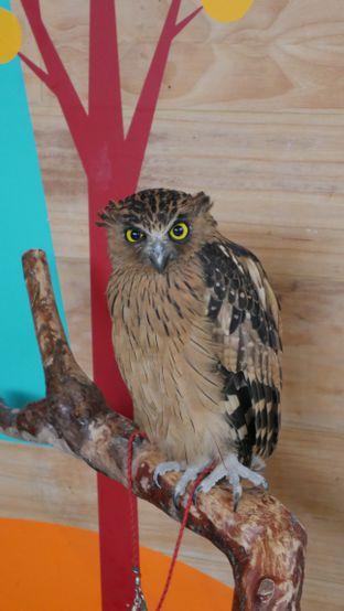 Foto 4 - Interior di Barn Owl Cafe oleh Olivia