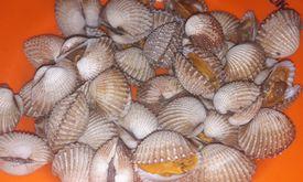 Seafood 68