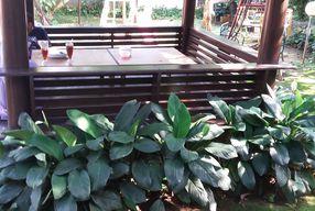 Foto Rumah Makan Rindang Alam
