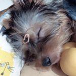 Foto Profil Grace Singgih