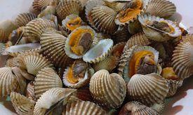 Barra Seafood 68