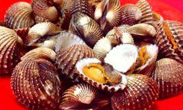 Seafood Rajawali Rizky 96