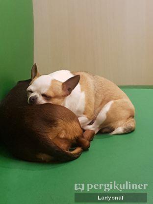 Foto 4 - Interior di Boogie Doggie Pet Cafe oleh Ladyonaf @placetogoandeat