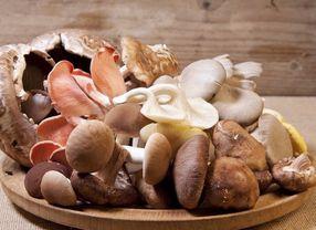 Intip Yuk Jenis-jenis Jamur yang Bisa Dimakan!
