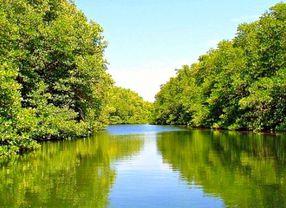 5 Wisata Mangrove Terindah di Indonesia Buat Percantik Insta Feed Kamu!