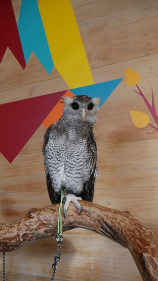 Foto 7 - Interior di Barn Owl Cafe oleh Olivia