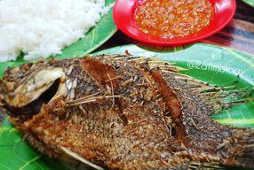 Foto Ikan Nila Pak Ugi