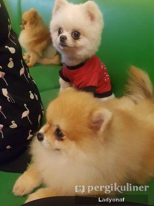 Foto 3 - Interior di Boogie Doggie Pet Cafe oleh Ladyonaf @placetogoandeat