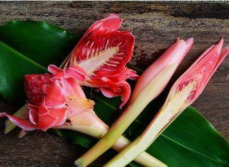 5 Bunga yang Bisa Dicampurkan dalam Masakan Indonesia